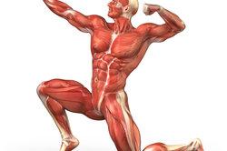 Besonders die Männer legen Wert auf einen ausgeprägten Brustmuskel.