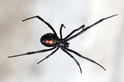 Solange es sich nicht um exotische Spinnen handelt, können Sie ganz entspannt bleiben.