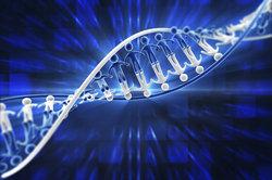 Chromosomen bestehen aus Abschnitten, die sich einfärben und als G-Banden identifizieren lassen.