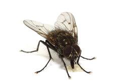 Nicht jedes Insekt ist willkommen.