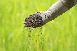 Pflanzendünger enthält Ammoniak.