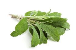 Salbei hilft bei Entzündungen, Halsschmerzen und Hitzewallungen.