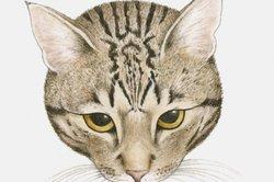 """Alle Katzen mit Tabby Zeichnung tragen ein """"M"""" auf der Stirn."""