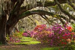 Gärten wundervoll individuell gestalten - trotz Vorlage