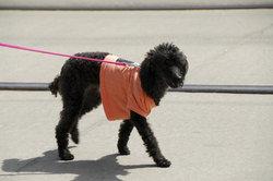Die Leinenführung nach Martin Rütter erleichtert Ihnen das Spazierengehen mit Ihrem Hund.