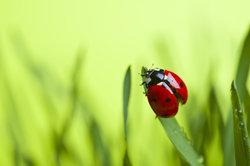 Marienkäfer sind bei Kindern jeden Alters sehr beliebt.
