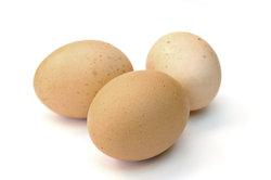 Hühnereier können im Brüter reifen.