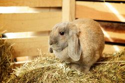Kaninchen mögen Zweige von Obstbäumen zum Benagen.