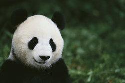 Der Rapper mit der Panda-Maske vertreibt auch seine eigene Modemarke namens VIOVIO.