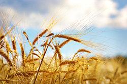 Weltweit erzeugt die Landwirtschaft für die Menschheit Lebensmittel.