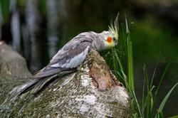 Ziervögel fühlen sich in einer großen Voliere wohl.