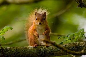 Eichhörnchen haben ein reiches Nahrungsangebot.