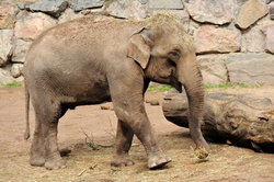 Elefantennachwuchs im Zoo ist nicht zu kaufen.