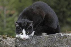 Manchmal wirken Katzen, als könnten sie Geister sehen.