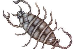 Um Skorpione gibt es viele Geschichten.