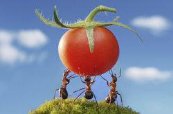 Die kleine Ameise hat viel Kraft.