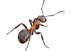 Ameisen müssen auch schlafen und sich ausruhen.