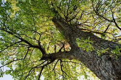 Wie viele Blätter hat dieser Baum?