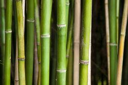 Aus Bambusteilen kann man Pflaster machen.