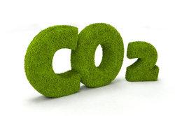 Pflanzen benötigen CO2 für ihre Photosynthese.