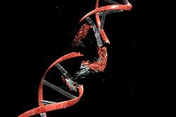Ein Gendefekt löst das Bloch-Sulzberger-Syndrom aus.