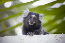Nicht jeder Tierliebhaber kann Affen halten.