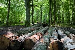 Nur mit einem Leseschein darf man Holz aus dem Wald mitnehmen.