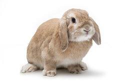 Zwergwidder sind kleine und kompakte Tiere.