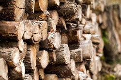 Aufgetürmtes Holz findet man oftmals am Waldrand.