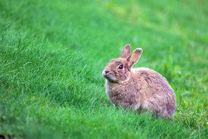 Bisher existiert hierzulande keine Tierkrankenversicherung für Kaninchen.