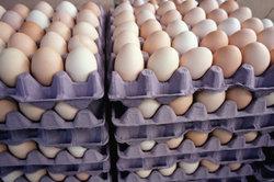 Zur Ermittlung der Legeleistung müssen die gelegten Eier täglich gezählt werden.