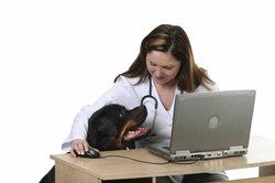 Tierärzte können den Hundechip auslesen.