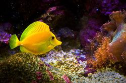 Fische gibt es auch im Onlinehandel zu kaufen.