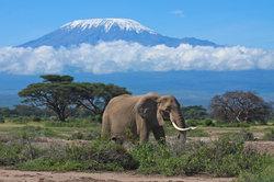 Schnee am Kilimandscharo