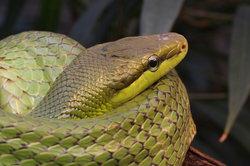 Schlangen sind Kriechtiere und können sich schnell bewegen.