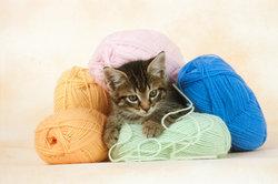 Katzen verbergen gerne ihr Unwohlsein, mit fatalen Folgen.