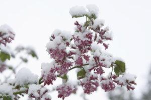 Blüten auch zur Winterszeit
