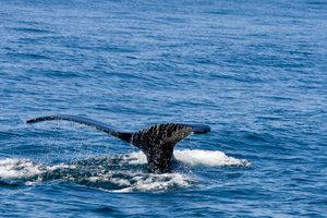 Herman Melvilles Moby Dick ist mehr als eine Geschichte über Walfang.