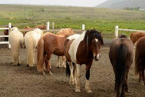 Den Ponys und Pferden geht es auf der Ranch richtig gut.