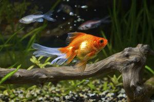 Klares Wasser sorgt für gesunde Fische