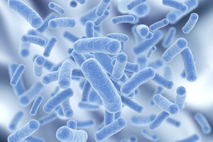 Bakterien können ganz unterschiedliche Größen aufweisen.