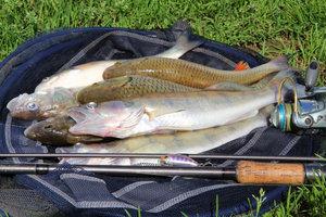 Fisch schmeckt auch gegrillt lecker.