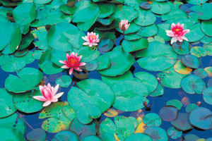 Ein Teich ohne Pumpe ist mit einem entsprechendem Pflanzenbesatz realisierbar..
