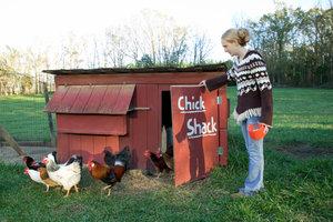Hobbyhalter haben oft mehrere verschiedene Hühnerrassen.