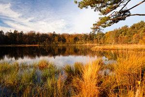 Einen natürlichen Karpfen-Teich anlegen