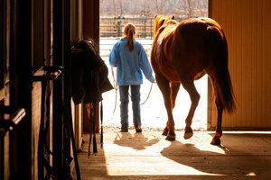 Ein Pferd benötigt nach dem Stallwechsel eine gewisse Zeit zur Eingewöhnung.