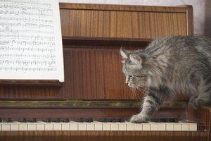 """""""Katzenmusik"""" ist keine eigene Musikrichtung."""