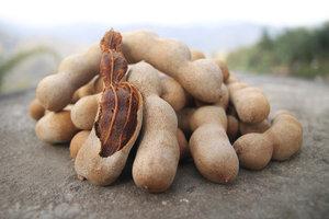 Das Mark von Tamarinden wird in vielen Gerichten verwendet.