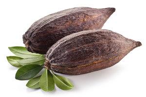 Kakaofrüchte können Sie im Internet bestellen.