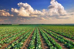 In der Landwirtschaft wird mit Spritzen gedüngt.